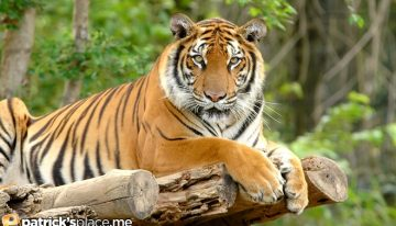 My 10 Favorite Exotic Animals