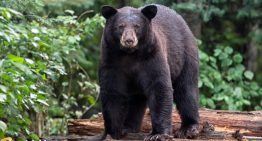 Grisly or Grizzly? Let's Bear Down on the Confusion