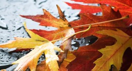 Autumn vs Fall: Which is the Better Choice?