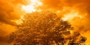 SC Capital Sets New Heat Record