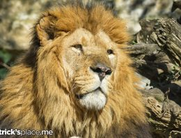 'A Lion's Share' May Not Mean What You Think