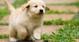 Dog Breeding Gone Nuts