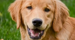 Study: Your Bond With Your Dog is Like A Parents' Bonds With Their Kids