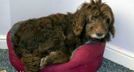 Giving a Pet Away Should Be a Last Resort