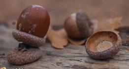 How the Grammatical 'Eggcorn' Get Its Strange Name