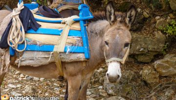Are You Smarter Than an Old Mule?